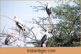 Birds, Wildlife in Bandhavgarh