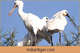 Birds, Wildlife in Bharatpur
