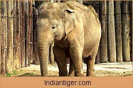 Elephant, Nature Tours India