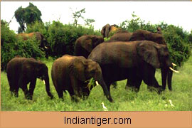 Elephant, South India Wildlife Tour