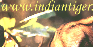 Indian Wildlife Tour,  Tiger Safari Tour,  Wildlife Tour Packages India