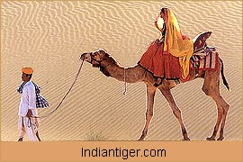 Desert, Jaisalmer Tour Packages