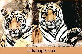 Tiger, Nature Tours India